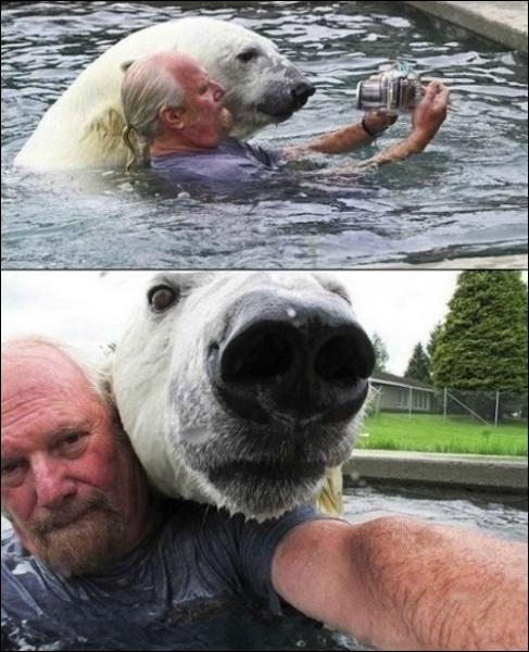 Une ourse polaire peut rester ...