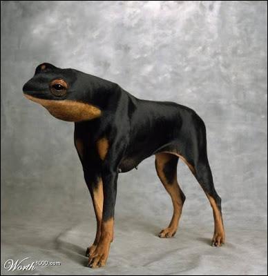 Quel cri peut pousser cet étrange chien ?