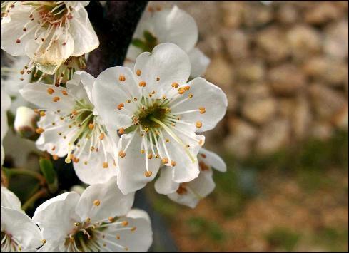 Ces fleurs donnent des fruits de couleur orangée très riches en potassium :