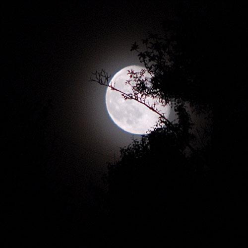 En débarquant sur la lune, Alan Shepard fit une chose qu'il avait promise à son père !