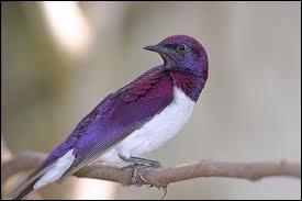 Quel animal est l'ancêtre de l'oiseau ?