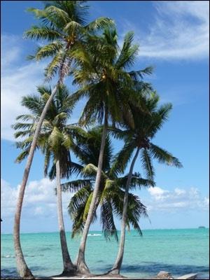 Les plantes quiz qcm plantes - Arbre noix de coco ...