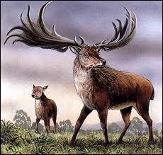 Cette espèce de cervidé a disparu de notre planète assez récemment. Surtout connu pour sa grande taille et ses bois impressionnants, ce cerf possédait plusieurs noms. Lesquels ?