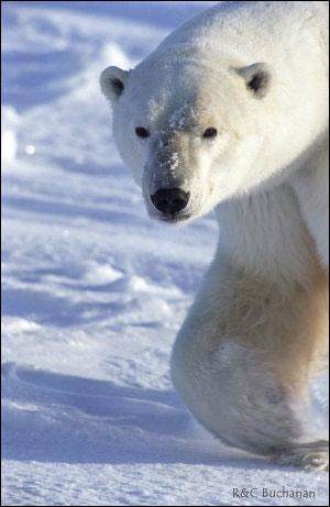 Combien d'espèces seraient menacées d'extinction aujourd'hui selon l'Union Mondiale pour la Nature (IUCN) ?