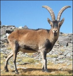 Quelles espèces ne peut-on plus observer à l'état sauvage en France de nos jours ?