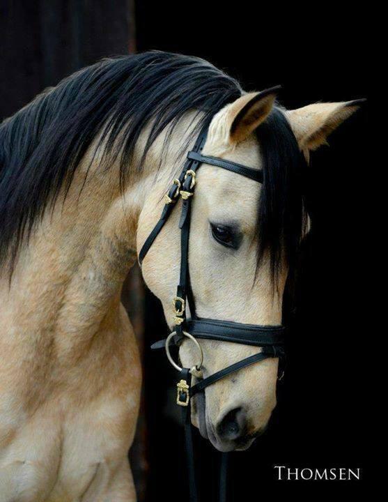 Le cheval dans tous ses états. (2)