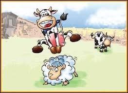 Offre bonne place de gardiens de vaches ...