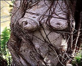 Tronc d'un arbre représentant :