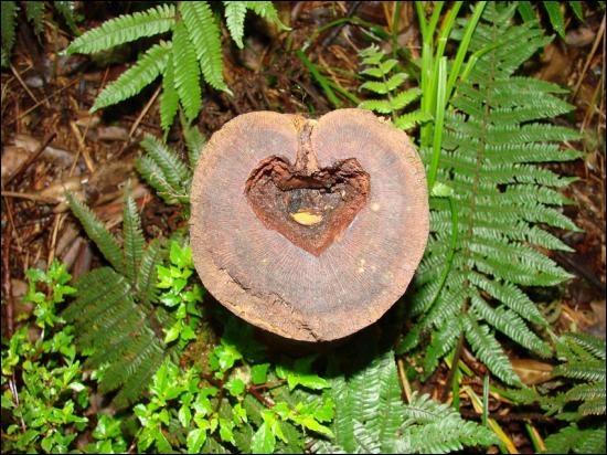 Des fougères et un cœur. Si cette espèce était xérophile, quel avantage aurait-elle ?