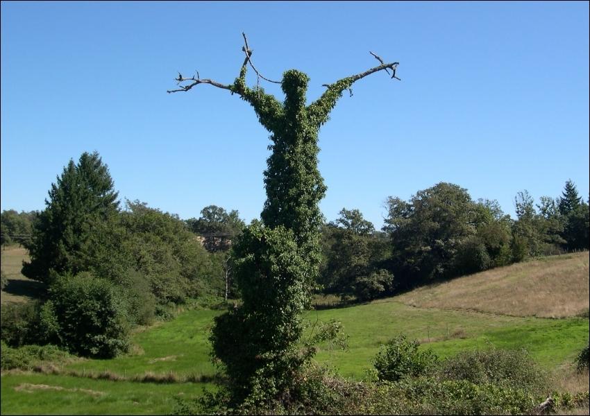 Photographié dans une campagne du Limousin. Où se trouve la commune de Folles ?