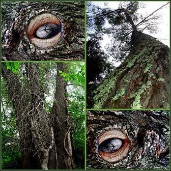 Où taille-t-on un arbre afin que cela assure la pérennité de la branche et son développement ?