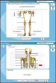 Le squelette d'un être humain en fin de vie compte 206 os mais, un bébé a plus d'os qu'un adulte : environ 270.