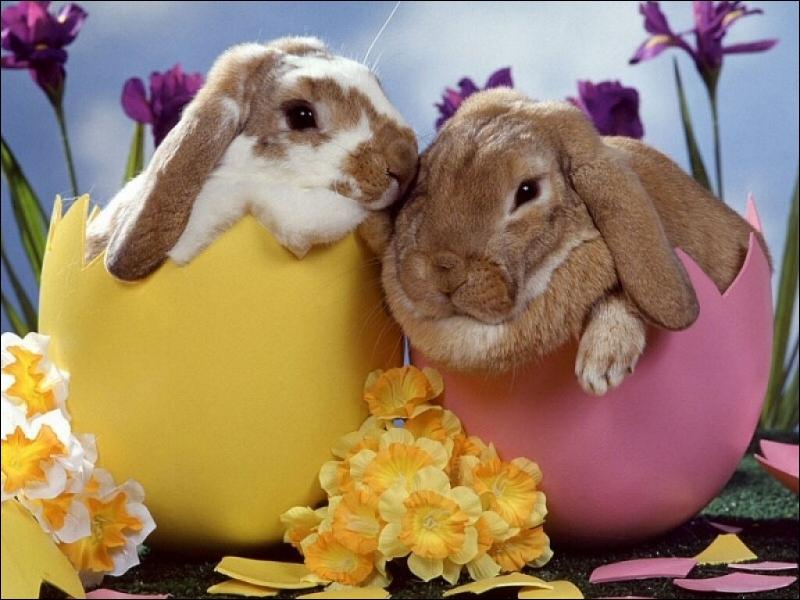 Quel est le cri du lapin ?