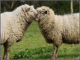 Quel est le régime alimentaire du mouton ?