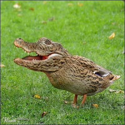 Une espèce très rare, née dans mon imagination !
