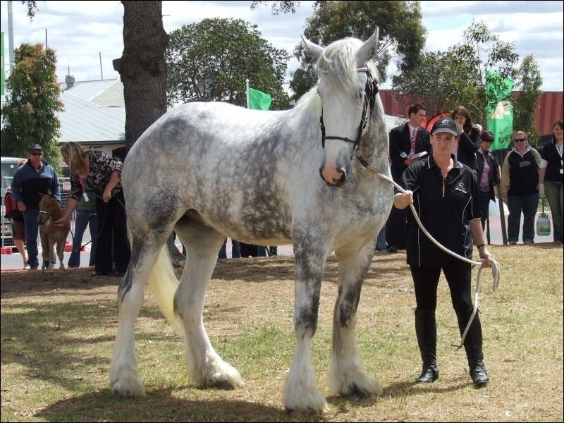 Quizz les chevaux quiz chevaux monde apprendre - Quel est le nom le plus porte au monde ...