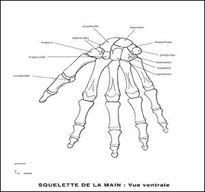27 os de la main sont répartis en 3 groupes. Retrouvez la seule bonne proposition.