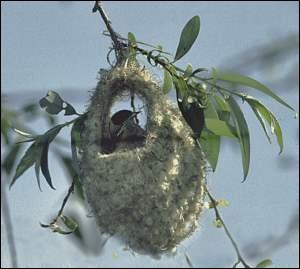 Quizz o habitez vous mon bel oiseau quiz oiseaux noms animaux - Dormir tete au sud est ...