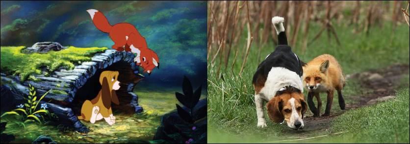 Vous connaissez bien sûr Rox et Rouky, mais qui est Rouky, le renard ou le chien ?