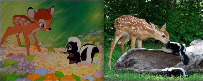 A la découverte du monde, Bambi rencontre une moufette qui va devenir son amie, quel nom lui donne-t-il ?