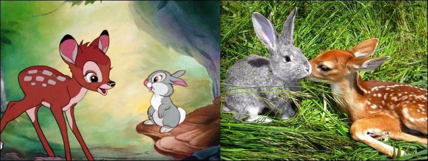 A peine sur ses pattes, ce lapin est le premier ami que va découvrir Bambi !