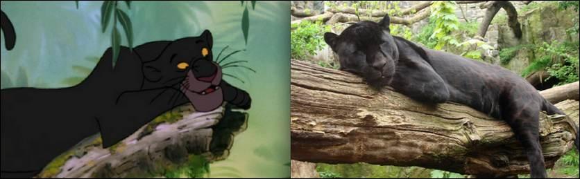 Célèbre panthère noire du  Livre de la Jungle , comment s'appelle-t-elle ?