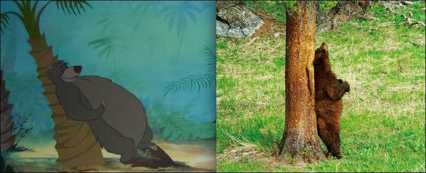 Comme le précédent animal, il est un très bon ami de Mowgli !