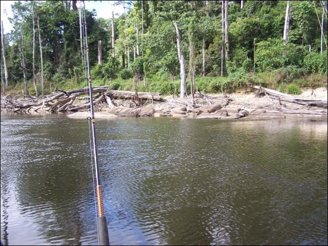 Dans la jungle amazonienne de Guyane, les orpailleurs clandestins sont recherchés très ...