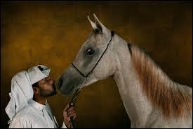 Par qui sont le plus souvent élevés les chevaux arabes ?