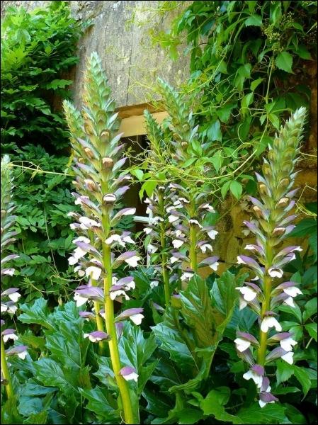 Quizz l 39 orthographe des plantes en images quiz orthographe for Plante ornementale