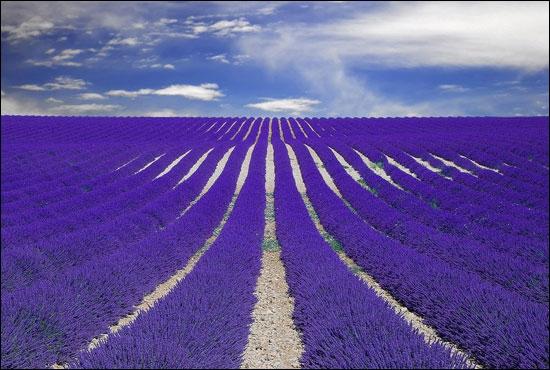 Ce n'est pas seulement la beauté de l'endroit qui vous ravira, prenez quelques graines, écrasez-les dans vos doigts, et vous ajouterez l'odeur !