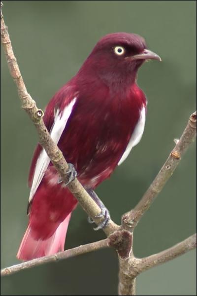 En parlant de ce volatile, il dit dans une chanson : Ca vit d'air pur et d'eau fraîche, un oiseau !