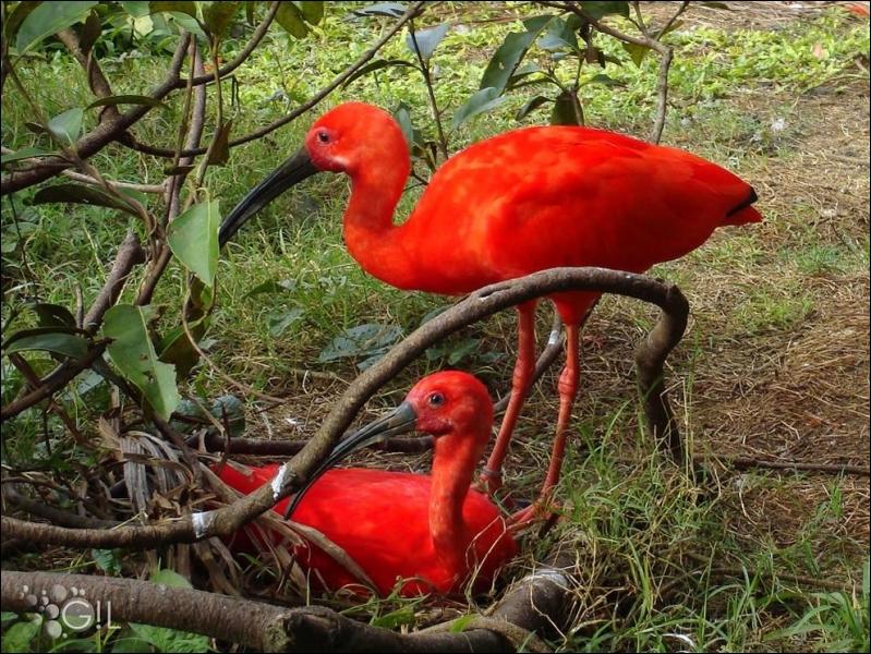 Trouvez le nom de cet oiseau, sans vous tromper !