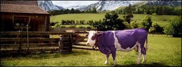 Qui est cette vache ?