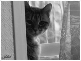 alors comme ça tu t'en vas, notre pendule peut s'arrêter, le chat peut te chercher partout, tu t'en fous  :