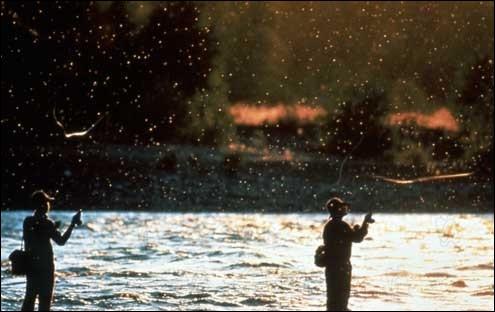 Quel acteur, alors débutant, peut-on voir au générique du film de Robert Redford  Et au milieu coule une rivière  ?