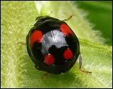 Et ce joli petit insecte ?