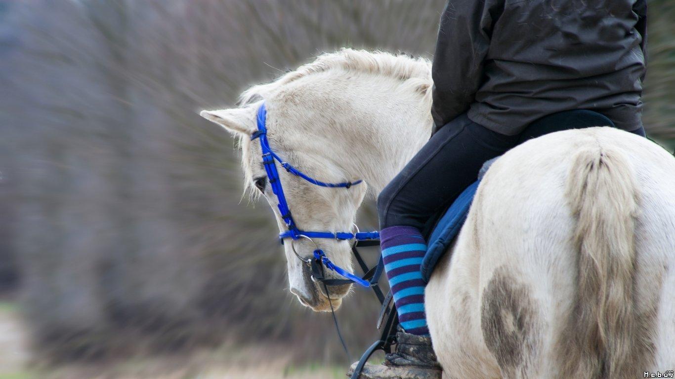 quizz galop 1 quiz chevaux equitation galop 1. Black Bedroom Furniture Sets. Home Design Ideas