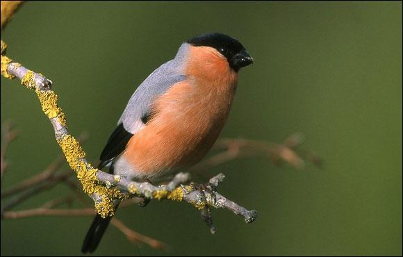 Reconnaissez-vous cet oiseau ?