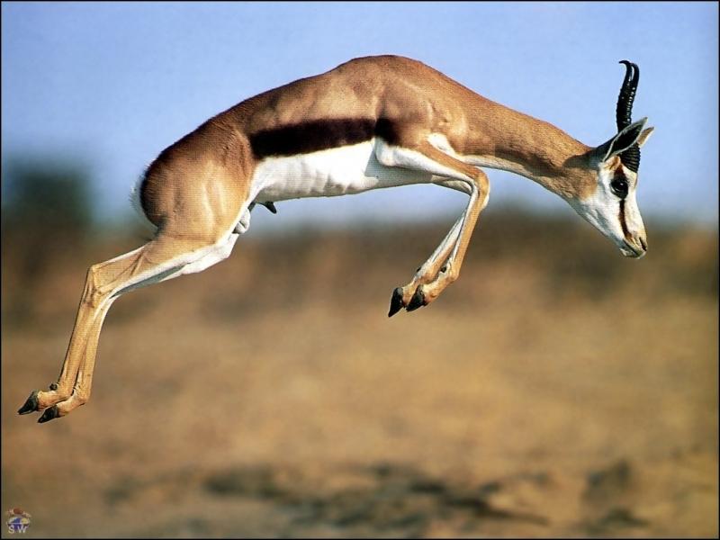Ce nom veut dire  Père , il précède  Dhabi , qui signifie  Gazelle  !