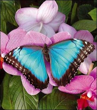 L'ensemble des papillons forme l'ordre des lépidoptères.