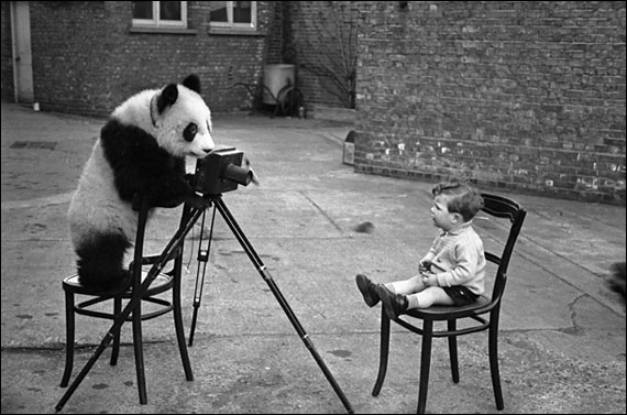Mais que dit le panda ?