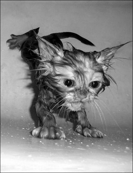 Un petit proverbe, pour se mettre en train : chat échaudé craint ...