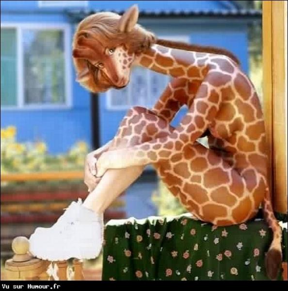 Les girafes ont-elles un coeur d'onze kg, une pression sanguine trois fois plus élevée que chez l'homme et un réseau de vaisseaux spongieux capable de ralentir l'afflux de sang vers le crâne ?