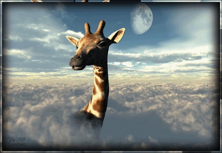 Les girafes sont-elles utilisées par certaines peuplades africaines pour cueillir les kiwanos (fruits de couleur orange) ?