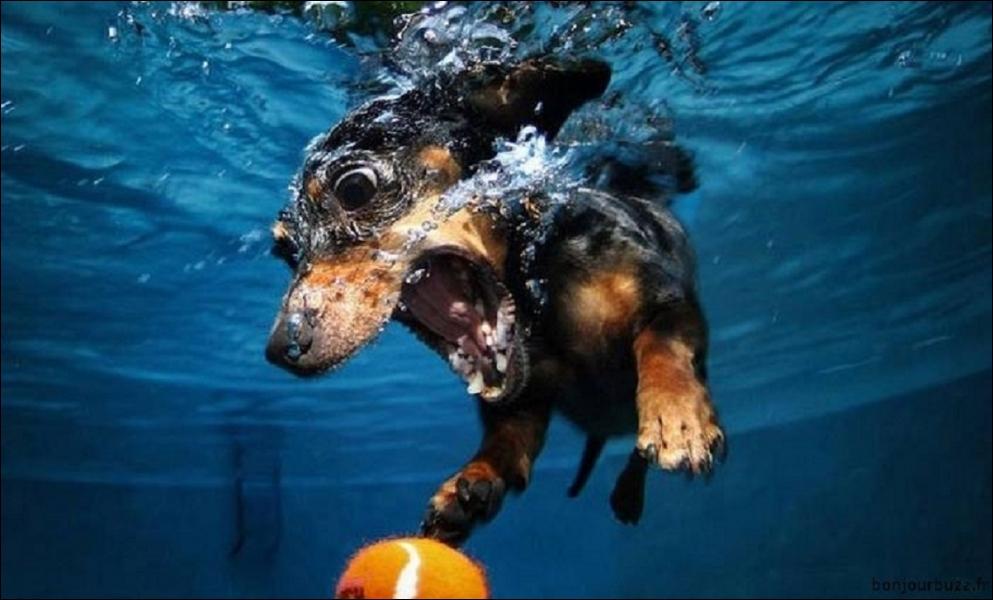 Les humains possèdent deux cordes vocales. Mais les chiens en ont-ils plus que deux ?