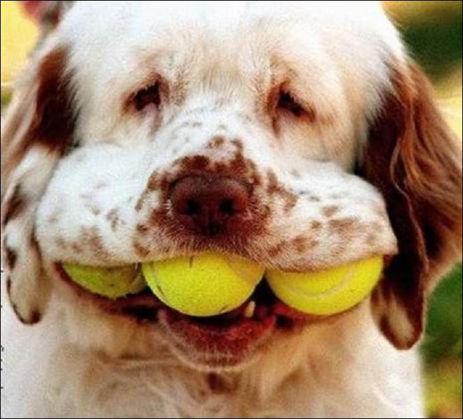Les chiens ont-ils plus ou moins de dents que les humains ?