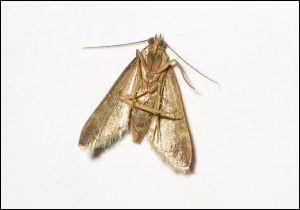 Comment se nomme cet insecte ?