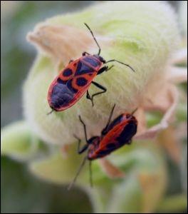 Que sont ces insectes ?