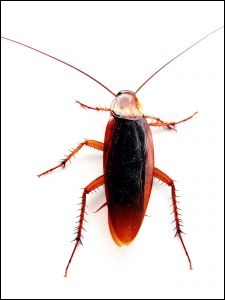 Quel est le nom de cet insecte ?